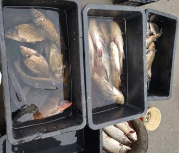 З початку року зафіксовано 31 порушення природоохоронного законодавства, - Хмельницький рибоохоронний патруль