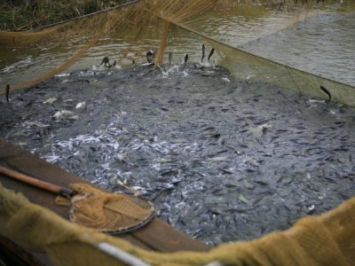 У водойми Хмельниччини вселено понад 13 тонн риби