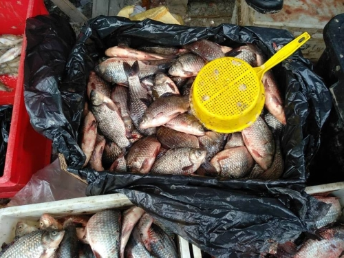За 5 днів роботи Хмельницький рибоохоронний патруль вилучив 110 кг риби та 23 сітки