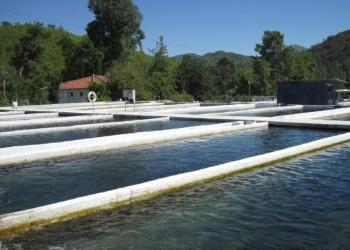 Зони аквакультури - орієнтир рибопродуктивності для підприємців