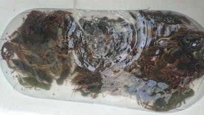 Хмельницький рибоохоронний патруль виявив незаконний продаж раків