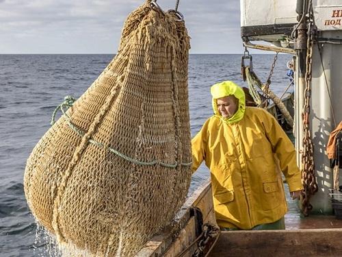 Фахівці ІРЕМ провели траловий облік риб у північно-західній частині Чорного моря